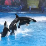 SeaWorld contact ban