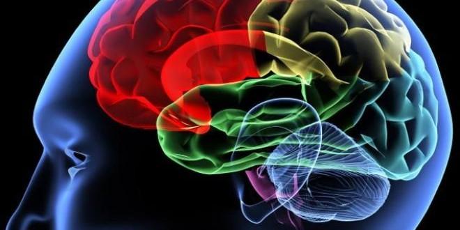 Head Trauma Lead to Alzheimer's Disease, Study