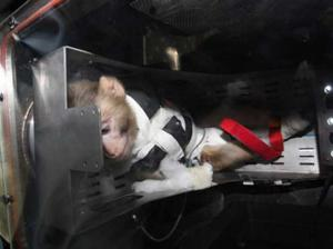 Iran sends second monkey into space (PHOTO)