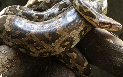 Japan police find 80 snakes in osaka home