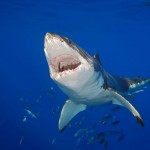 Doctor stabs shark, stitches wound and heads to pub