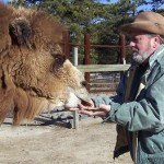 Pigskin-picking Camel who predicted American football games dies