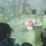 White tiger mauls man who jumped into cage