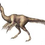 Anzu wyliei : New dinosaur called the Chicken From Hell