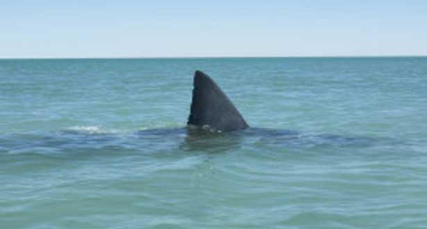 63-Year-Old Woman Killed in Australia Shark Attack