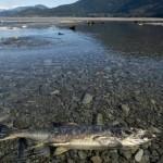 BC Environmental Monitoring Falling Short