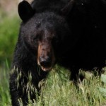 Bear drags Florida woman from garage