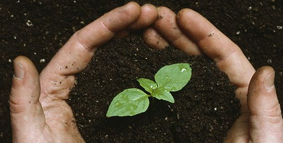 Open-source seeds : Agreement keeps use of new seed varieties unrestricted