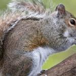 Squirrel blamed for $300K damage to Ind. building