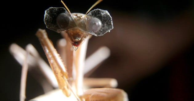This insect wears world's tiniest 3D glasses (Video)