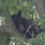 US : NC wildlife officials warn about black bears