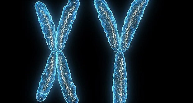Y Chromosomes Originated More Than 180 Million Years Ago, Study