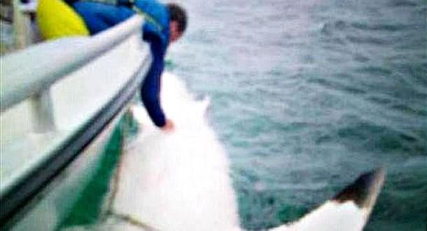 Australians Track 16-Foot 'Joan of Shark' (Photo)