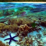 Australia: Great Barrier Reef under threat from water runoff