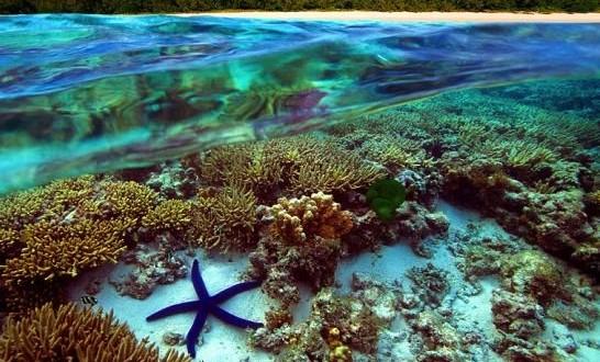 Australia: Great Barrier Reef under threat from water runoff