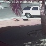 Hero cat : Dog that attacked boy was euthanized