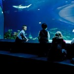 Jane Goodall urges Vancouver Aquarium to end cetacean captivity, Report
