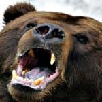 Justin Cardinal : Man survives bear attack in northern Alberta