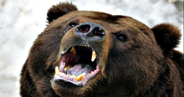 Justin Cardinal : Man survives bear attack in northern Alberta