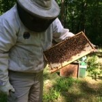 Local beekeepers say numbers down