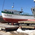 Manitoba : Province plots attack on zebra mussels