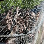 Pentagon 'zombie apocalypse' plan gets media roars, Report