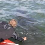 Tangled humpback set free in daring rescue