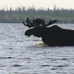 Two women in moose attack