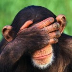 Chimps Outwit Humans in Games of Strategy, Study