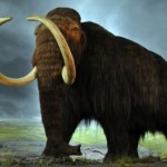 Climate Not Responsible for Large Mammal Extinction, research