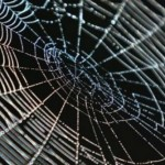 Spiders use their webs to talk to fellow arthropods, New Study