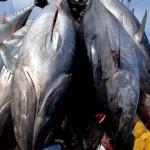 US : Kiribati commits to fishery-free reserve
