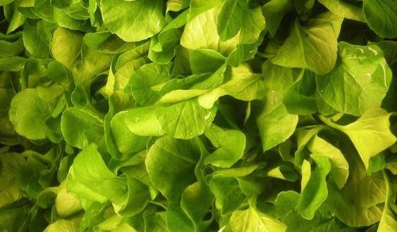 Watercress named top 'powerhouse' veggie, New Study