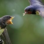 Pesticides now linked to declining bird populations, Dutch study
