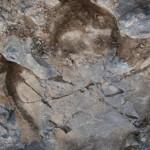 Researchers Discover Thousands of Dinosaur Footprints in Alaska