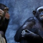 Researchers Learn the Language of the Chimpanzees