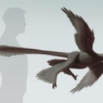 Researchers discover largest four-winged dinosaur to date