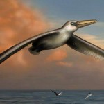 Researchers uncover biggest-ever flying bird