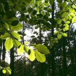 Researchers watch photosynthesis in action