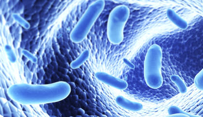 Smartphone app tracks how gut bacteria affect health, Study