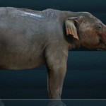 The Gomphotheres: Elephant Ancestor May have Lived Longer Than Once Thought