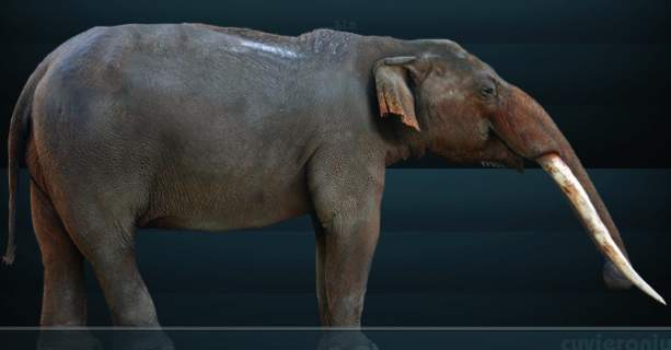 The Gomphotheres: Elephant Ancestor May have Lived Longer ...