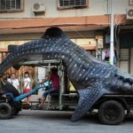 Chinese fisherman transports giant whale shark on his truck