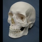 RCMP : Skull mystery emerges from garage in Hinton