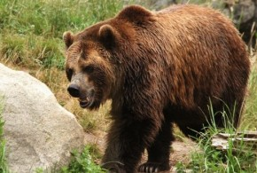 Woman Mauled by Bear Drives Herself to Hospital