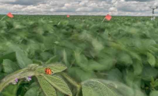 Climate Change: Decline in wind may affect predator-prey balance
