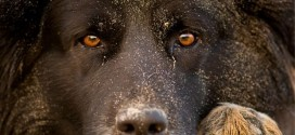 Scientists develop a new test for psychological wellbeing of dogs
