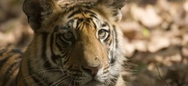 Wildlife populations fall by half in 40 years : WWF Report