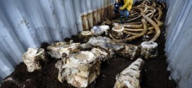 Blue whale bones land in the compost, Report