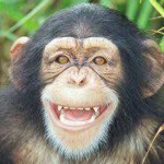 Chimp 'personhood' case goes to New York court